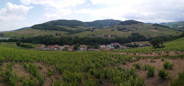 2015-005-24 france beaujolais, countryside, village wine region panorama sm